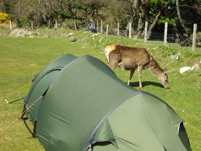 DEER AND TENT